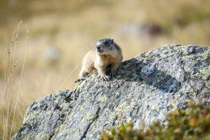 Rifugio Dorigoni | Marmotta